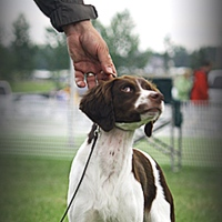 Delayed Rewards Are Missed Opportunities in Scent Dog Training