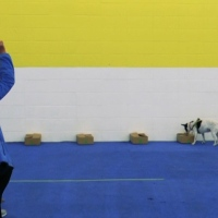 How to Train a Freeze Indication Using Leash Pressure