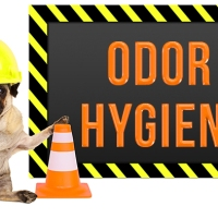 Odor Hygiene at Nosework Competitions