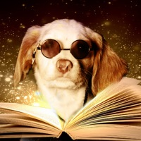 Top Scent Dog Training Books and Websites 2017