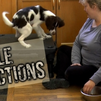 Table Distraction Game for Sniffer Dogs