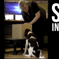 How to Train Your Dog to Sit at Scent - Part 2 Scent Puppy Foundation