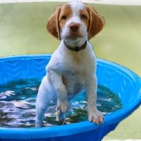 Heat and Sniffer Dog Acclimatization