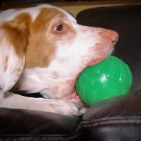 Top Dog Toys of 2018 - Help Your Dog Relax, Chew and Be Quiet