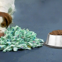 Dinner Do's and Don'ts for Sniffer Dogs