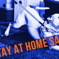 Sniffer Dog Cam - 50% OFF STAY AT HOME SALE Ends April 19, 2020