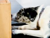 Photo of dog indicating